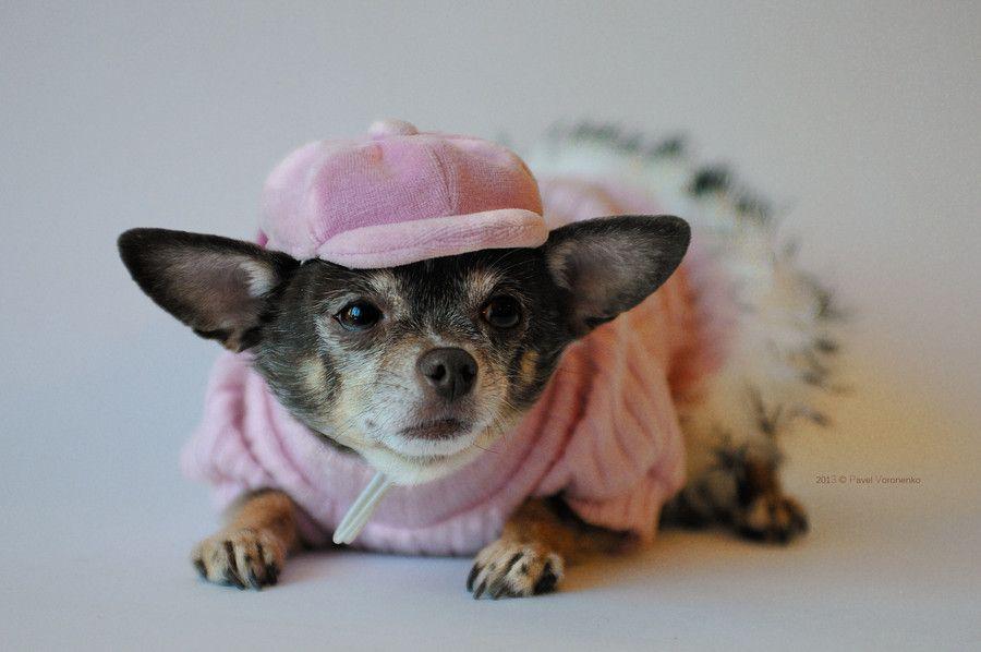 13. Sly fashionable dog by Pavel Voronenko