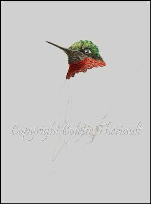 Hummingbird paintings by Colette Theriault