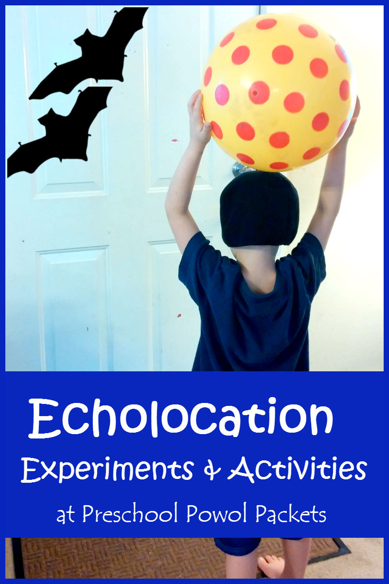 Good Bat Science Experiments: Echolocation Activities!