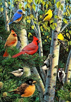 Birch Tree Songbirds