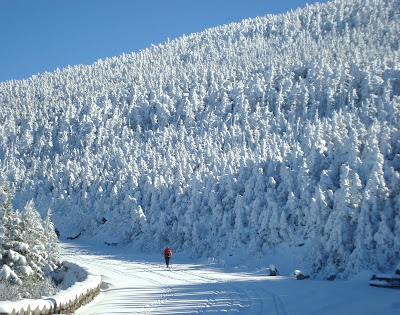 Snow-blasted trees under cobalt skies on the Whiteface Auto Road.   The Saratoga Skier and Hiker, first-hand accounts of adventures in the Adirondacks and beyond, and Gore Mountain ski blog.