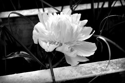Site Blogspot  Garden Fencing Designs on Nieman Design  More Garden Pictures
