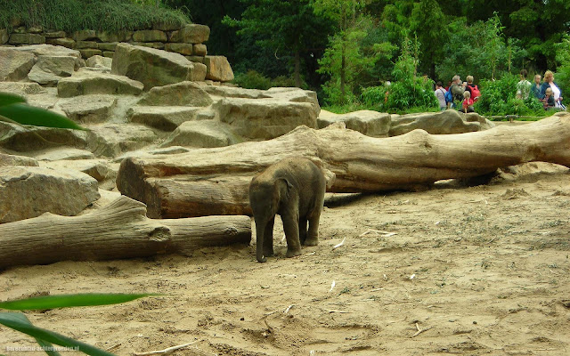 Foto van een lief klein jong olifantje