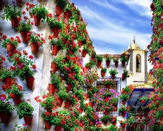 patio andaluz con macetas de geranios