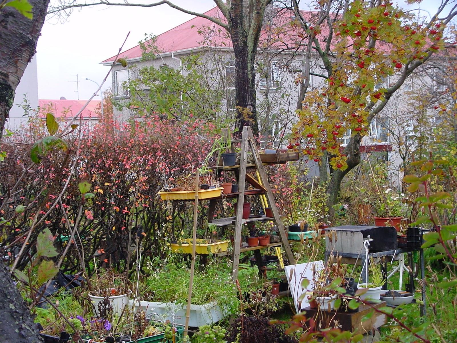 Jardineria eladio nonay el jard n olvidado jardiner a - Jardineria eladio nonay ...