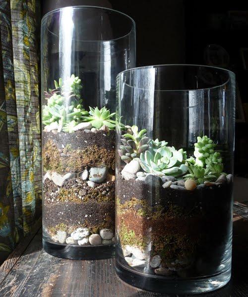 bellewether succulent terrariums. Black Bedroom Furniture Sets. Home Design Ideas