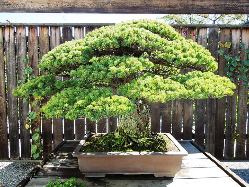 A Curmudgeon Abroad Arboretum Day