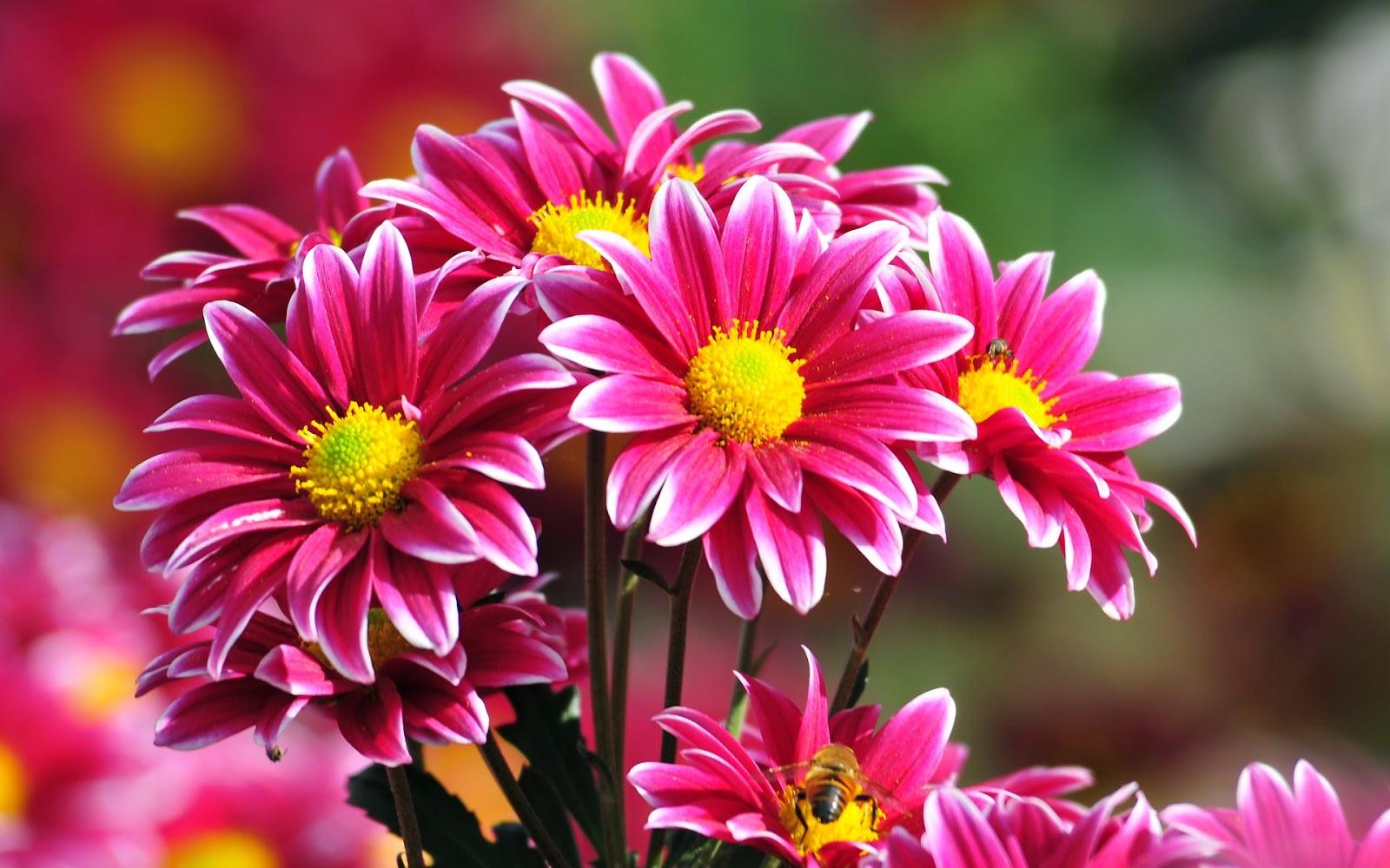 Beautiful fresh flowers izmirmasajfo