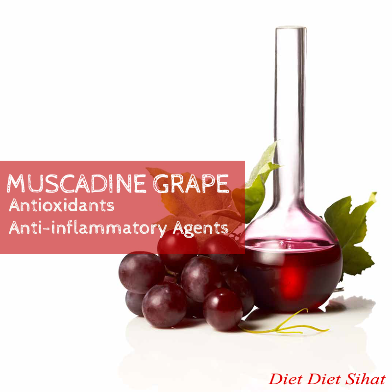 muscadine grape