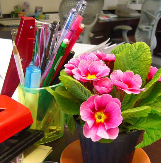 La casa de los mart nez flores y plantas en nuestro for Como decorar mi despacho