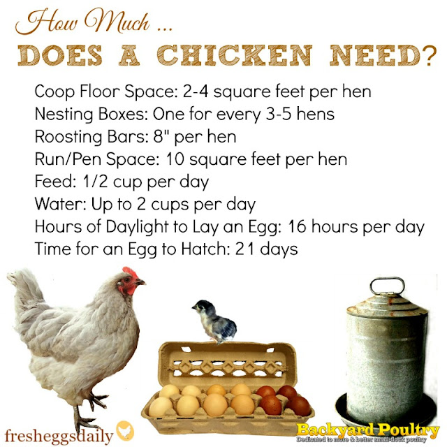 How much space feed water light does a chicken for What do you need to build a house