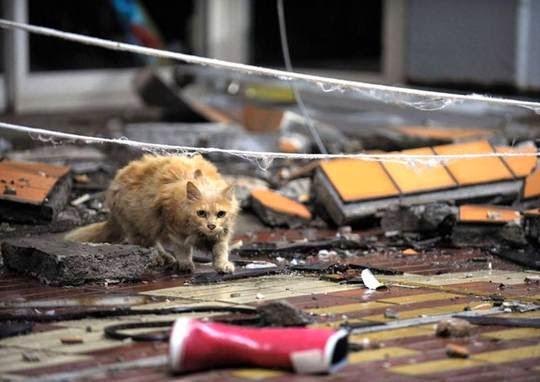 Fukushima cats