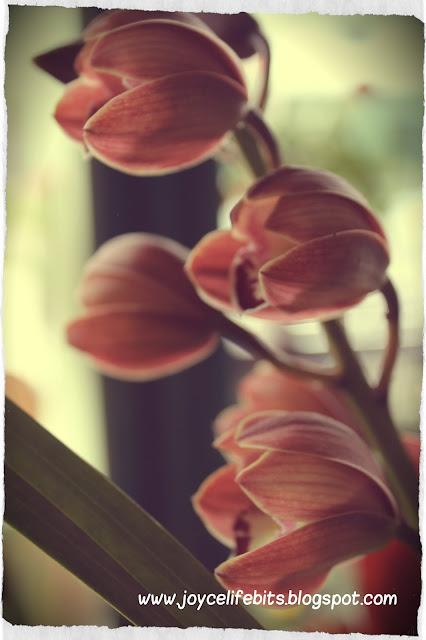 poster tulip cameron highlands
