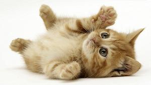 Совсем крошечные малыши котята на красивых фотографиях и картинках.  Мир кошек своеобразен и непостижим.