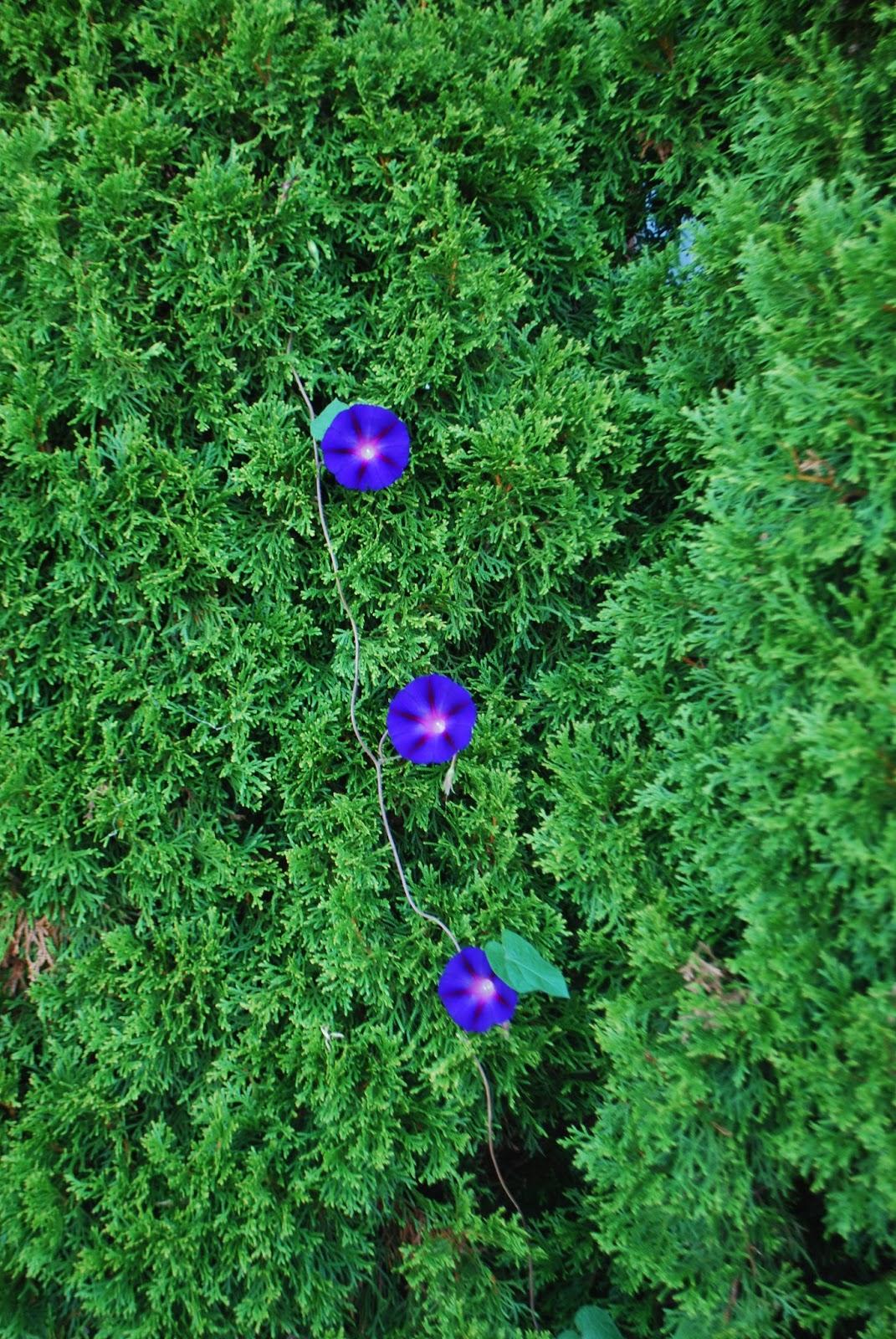 3 jardins au qu bec octobre 2015 for Jardin lune octobre 2015
