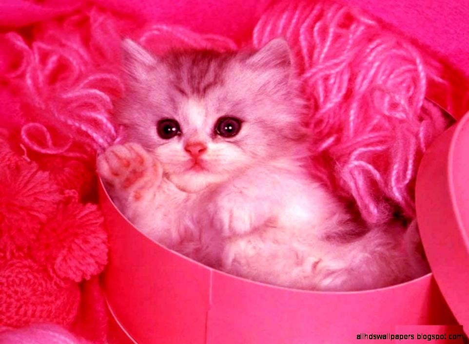 cute cat with pink background all hd wallpapers