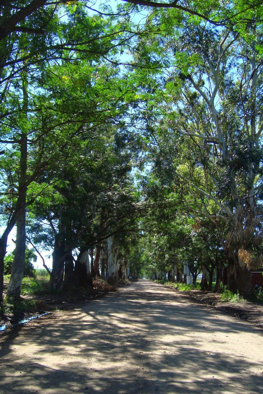 Caminos de El Talar
