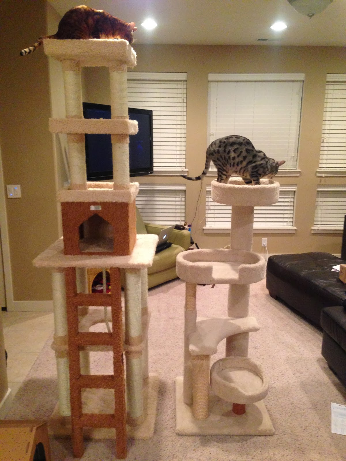 Jdcargile Com New Cat Tree For The Bengals