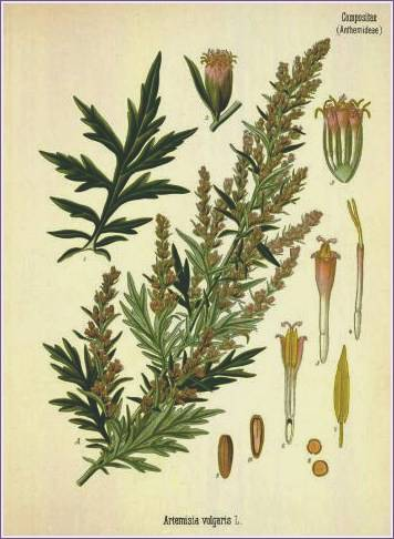 The Deepest Well: My Herb Cabinet - Wormwood