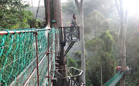 photo source & THE WORLD GEOGRAPHY: 10 Amazing Treetop Walkways Around the World