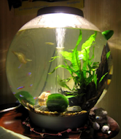 All About Aquarium Fish Exciting New Ways To Keep Pet Fish