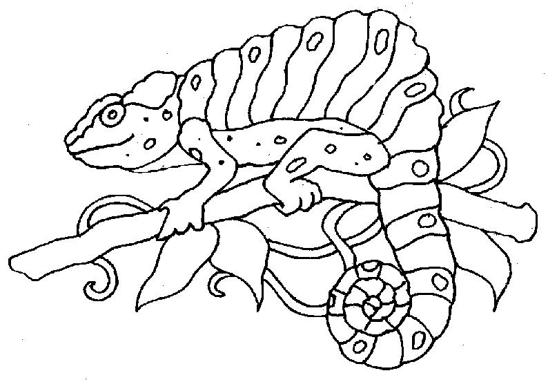 Maestra De Primaria Dibujos De Camaleones Para Colorear