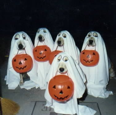 Funny Ghost dogs