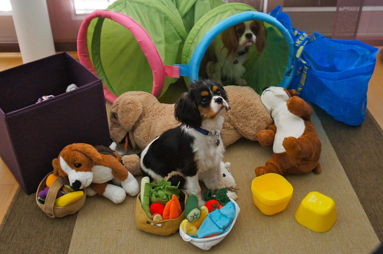 Ikea pour les chiens baikasblog for Ikea livraison le dimanche