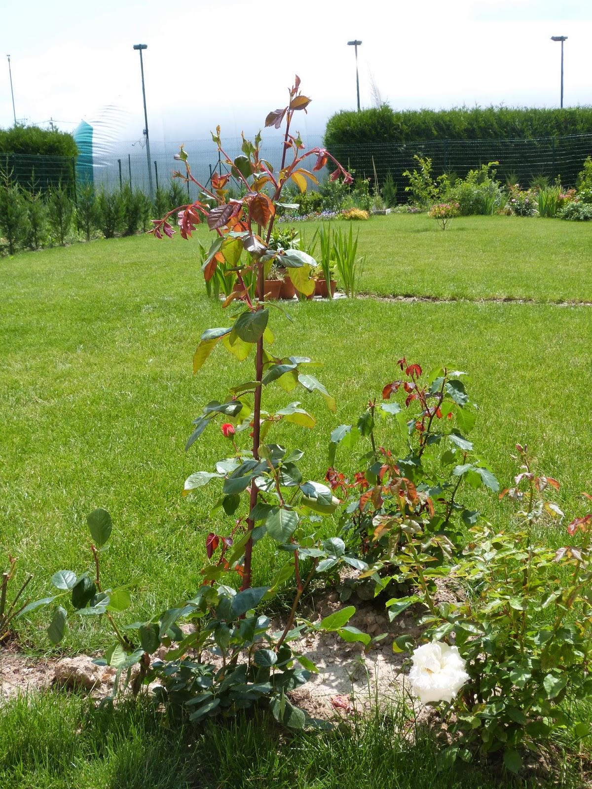 P1020598 Unique De Parterre De Fleurs Devant Maison Schème
