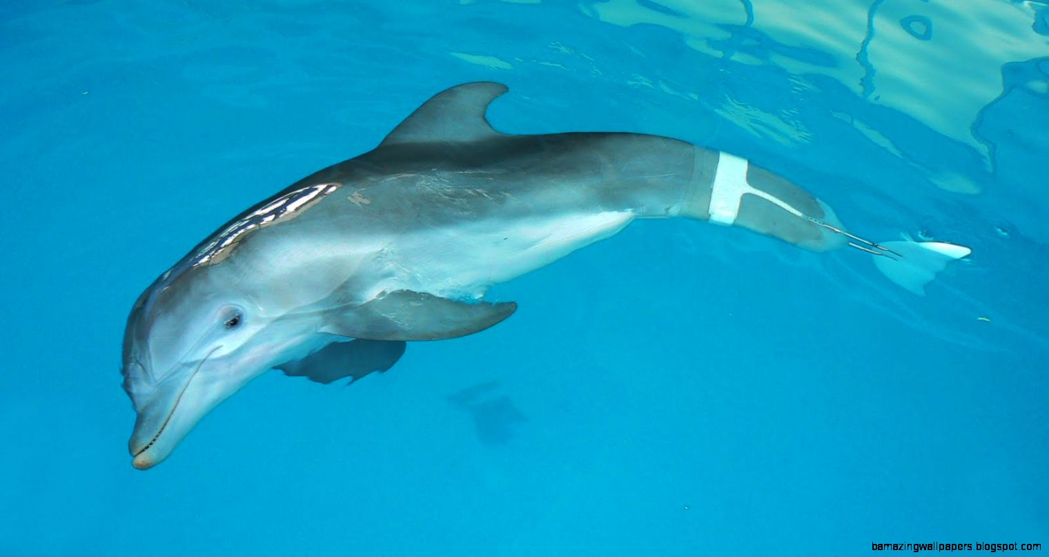 Dolphin tale 2 Dolphin tale and Dolphins on Pinterest