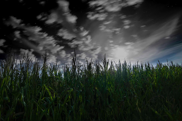 Hohenfels Volks: Corn Copyright 2012 BodenseeBob