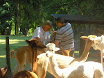 Alpaca Experience Weekend