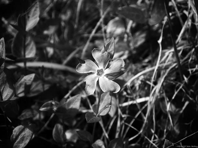 Week 15: Flower