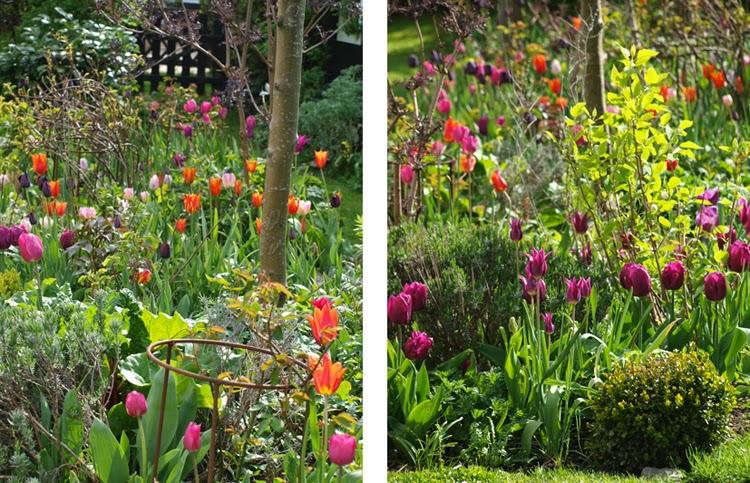 Farverige tulipanbede