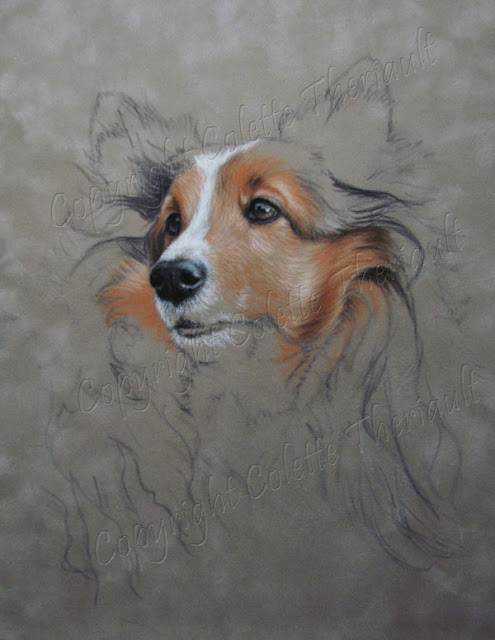 Shetland sheepdog painting in pastel by animal artist Colette Theriault