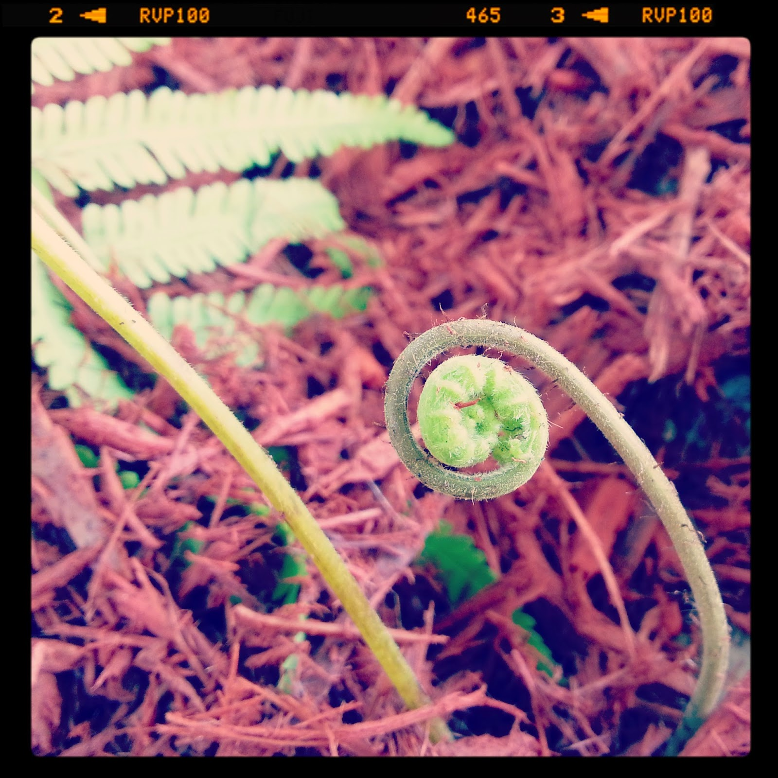 http://instagram.com/p/m_XXI_N7LY/