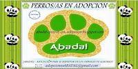 Asociación ABADAL - Perr@s en Adopción