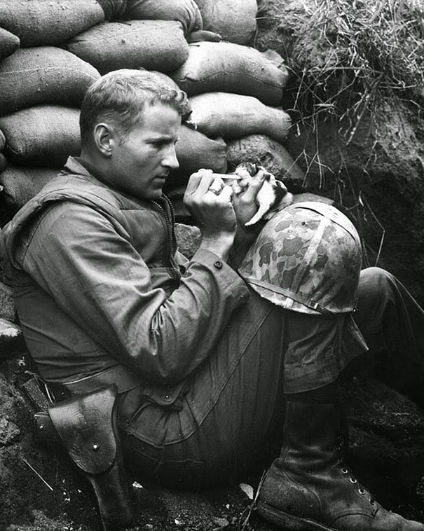 20+ Photos That Will Restore Your Faith In Humanity - Soldier Rescuing A Kitten In Korea