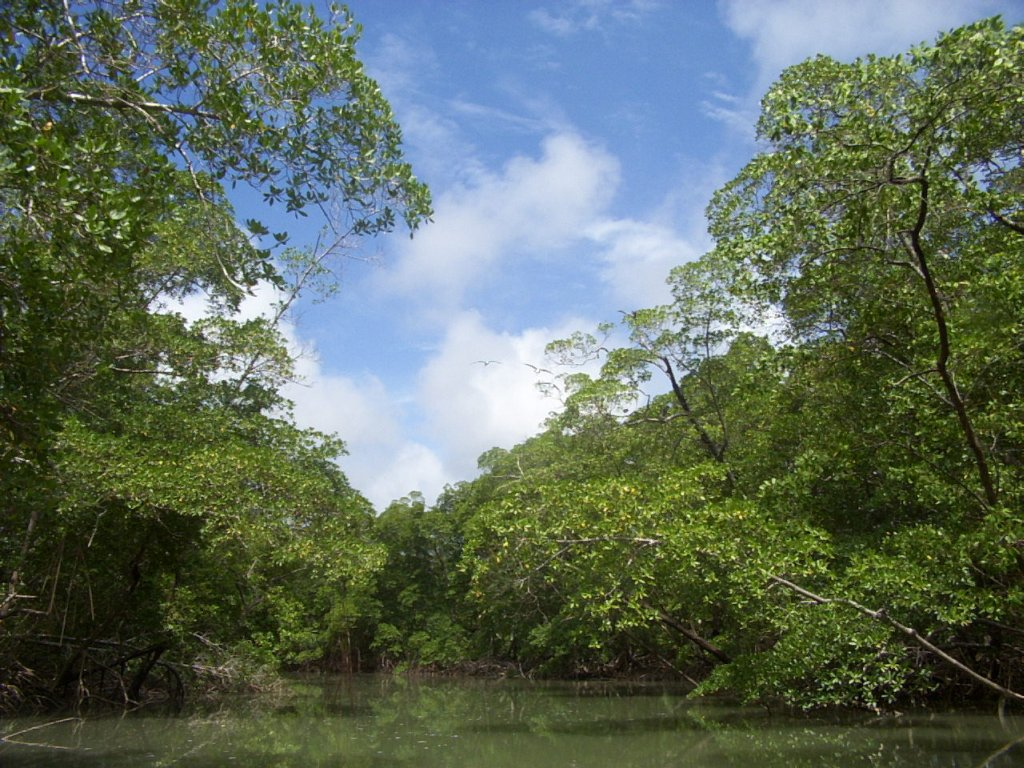 the amazon rainforest Rainforest facts tropical forests presently cover about 24 billion hectares or about 16 percent of earth's land surface the world's largest rainforest is.