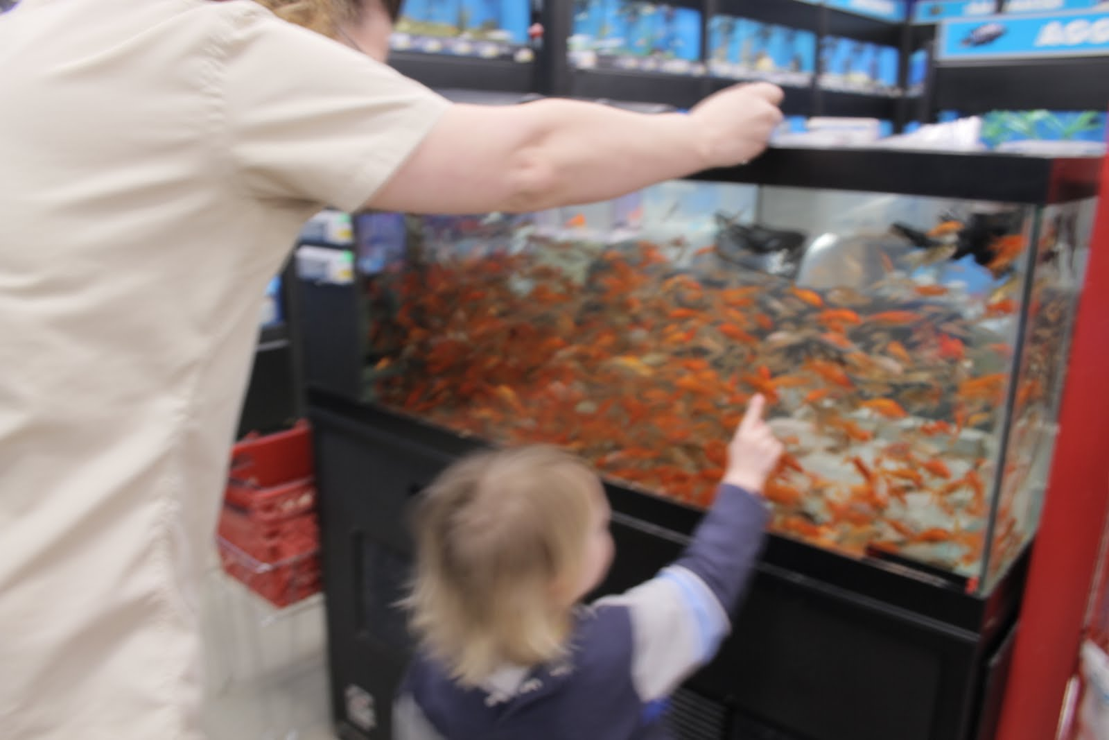 Nana 39 s school learning through play april 2011 for Feeder fish petco