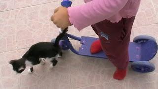 Szöveg: Próbáljuk csak ki.... Menj el macsek. Kép: Roller kipróbálás az ajándékozott által.  A kis pepita macsek is ott lábatlankodik a piros zoknijú tulajdonos rollere előtt.