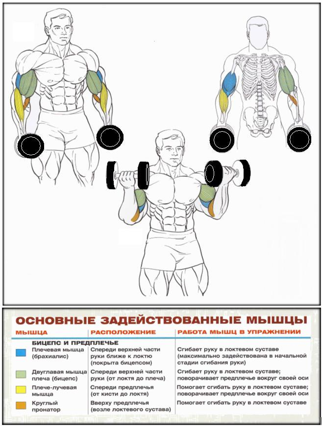 Как накачать мышцы в домашних условиях бицепсы