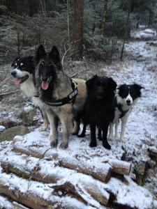 Dewey, Kahrma, Ficus og Key
