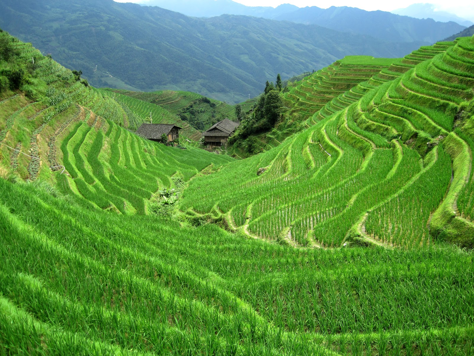 Rice fields hd landscape wallpapers desktop wallpapers for Terrace nature