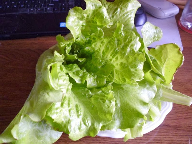 Nevada Lettuce Harvest