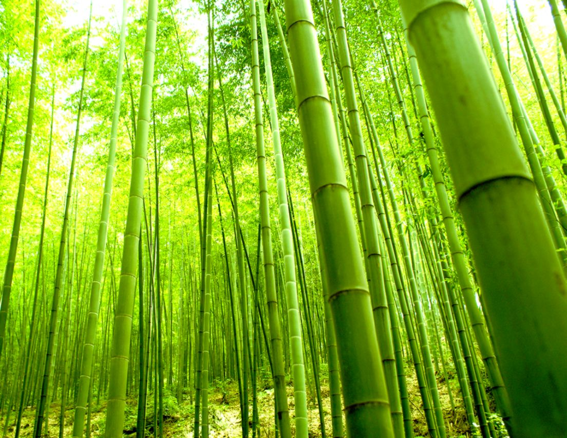 Bamboo Forest Wall Mural Wallpaper Image Wallpapers HD