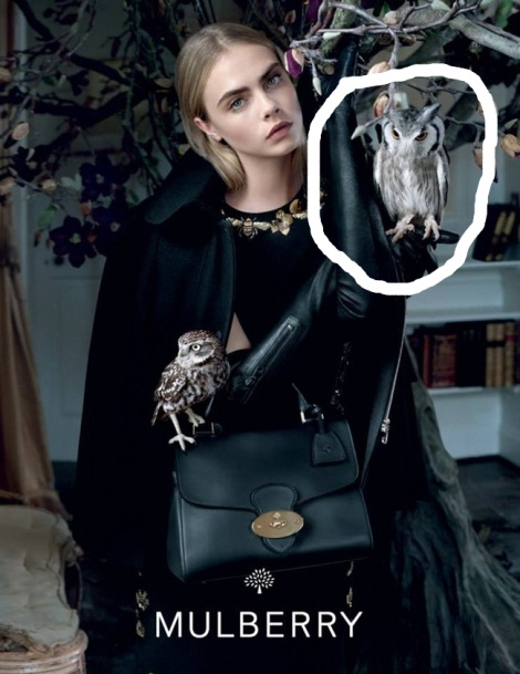 Owls in Mulberry Campaign Image