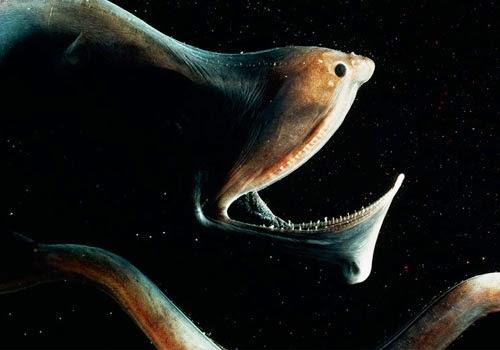 Картинки кальмары