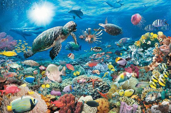 Trovate in mare 230'000 specie ne mancano ancora 750'000