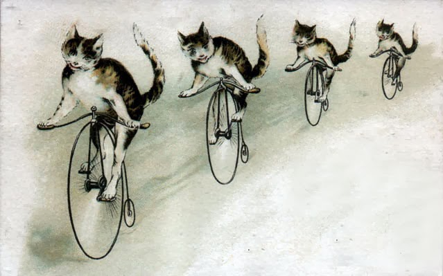 picture of a line of 4 cats bicycling